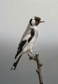 Carsten Höller, Birds, 2006