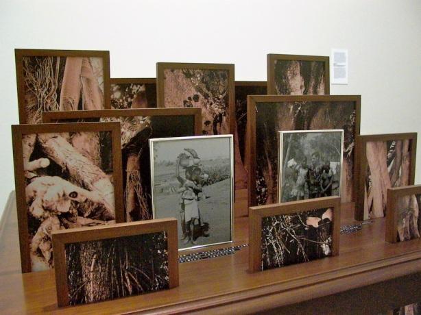 Vasco Araújo, Botânica, 2012, Mesa de Madeira, 15 fotografias digitais, molduras de madeira e metal, Cortesia do artista e da Galeria Filomena Soares.