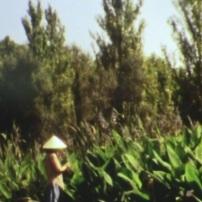 Cristina Regadas (Portugal), Cling, 2012, filme super 8 transferido para vídeo, cor, som, 2' 46''