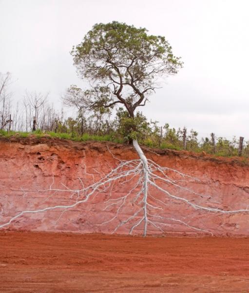 Pedro Motta, Da série / From the series «Natureza das Coisas», 2013