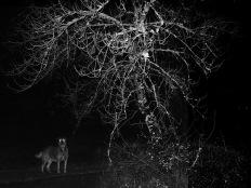 Ângela Berlinde, da série 'Adeus, amor'. Lapa do Lobo, 2013. Cortesia da artista.