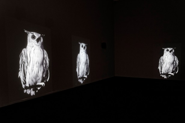 Ann Lislegaard, Oracles, Owls -- Some Animals Never Sleep. Cortesia da artista e da Biennale de Lyon.
