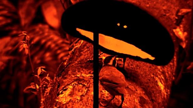 Diogo Evangelista, Ilha [Island], 2013. Fotograma de vídeo / Video still . Cortesia do artista / Courtesy of the artist.