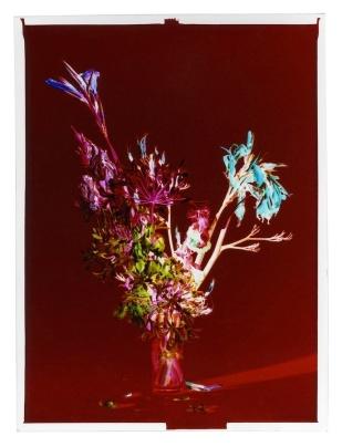 Nádia Rodrigues Ribeiro, Sem título [Untitled] (11.07.2012, 16h40), 2012, Negativo em papel cromogéneo, prova única / Negative on cromogenic paper, single print, 9 x 12 cm. Cortesia da artista / Courtesy of the artista.