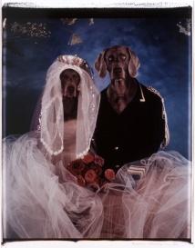 William Wegman Cinderella (mariés), 1993 © William Wegman / CNAP /Photographe: Y. Chenot, Paris.