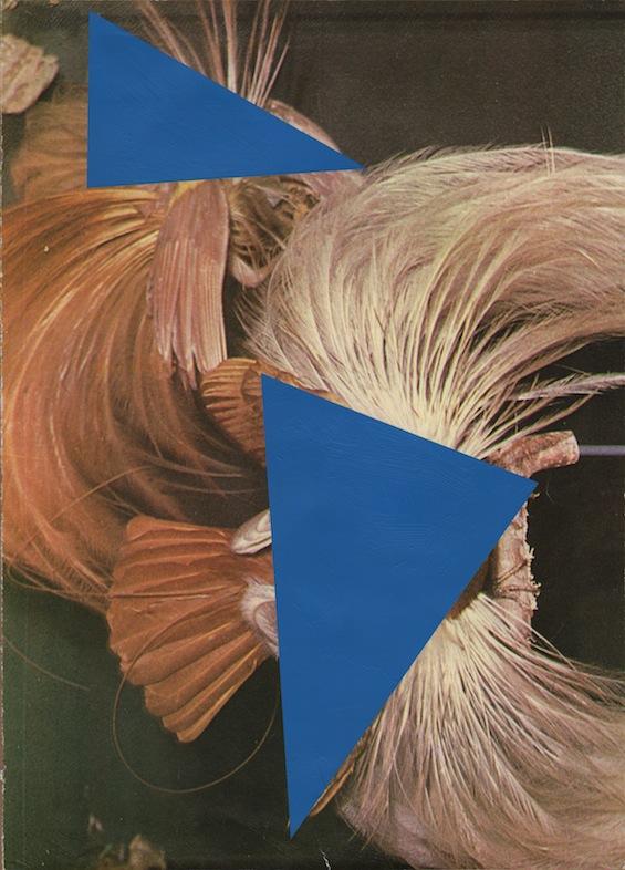 João Ferro Martins, Pássaros do Paraíso, exposição Reprise, Espaço Padaria Independente - Galeria Fernando Santos, Porto, 2014.