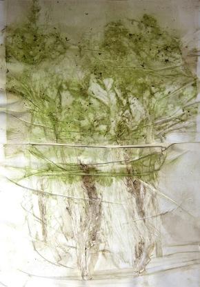 Edgar Massul, da série 'das tuas margens, algumas plantas espremidas', 2014. Cortesia do artista.