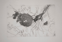 Isabel Correia, do Projeto Paisagem: Phenomena, 2013. Cortesia da artista.