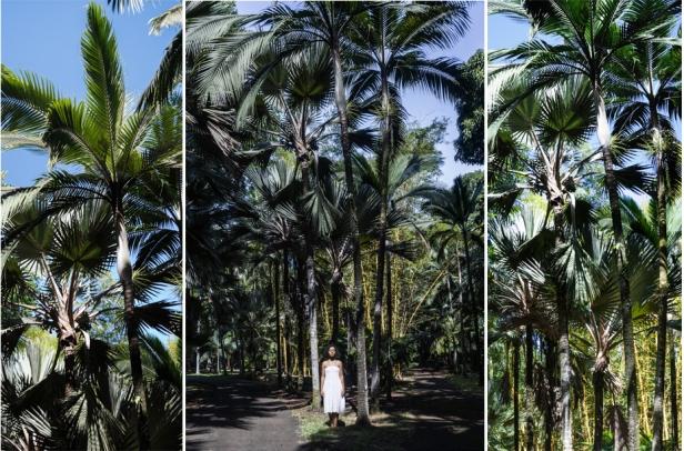 Mónica de Miranda, Botanic gardens (da série Linetrap), 2014. Inkjet print, 230 x 340 cm, (photographic installation). Cortesia da artista e Carlos Carvalho Arte Contemporânea.