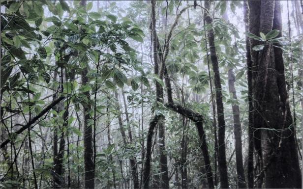 Mónica de Miranda, Untitled (da série Linetrap), 2014. Cotton treads on inkjet print, 40 x 60 cm, Ed. 5 + 1 AP. Cortesia da artista e Carlos Carvalho Arte Contemporânea.