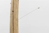 Joana Escoval, Help is not on the way, 2014 Tronco de cedro derrubado por tempestade, latão, linho, pena de periquito Aprox. 360 × p 52 cm. Cortesia da artista e Vera Cortês Art Agency, Lisboa, 2014-2015.