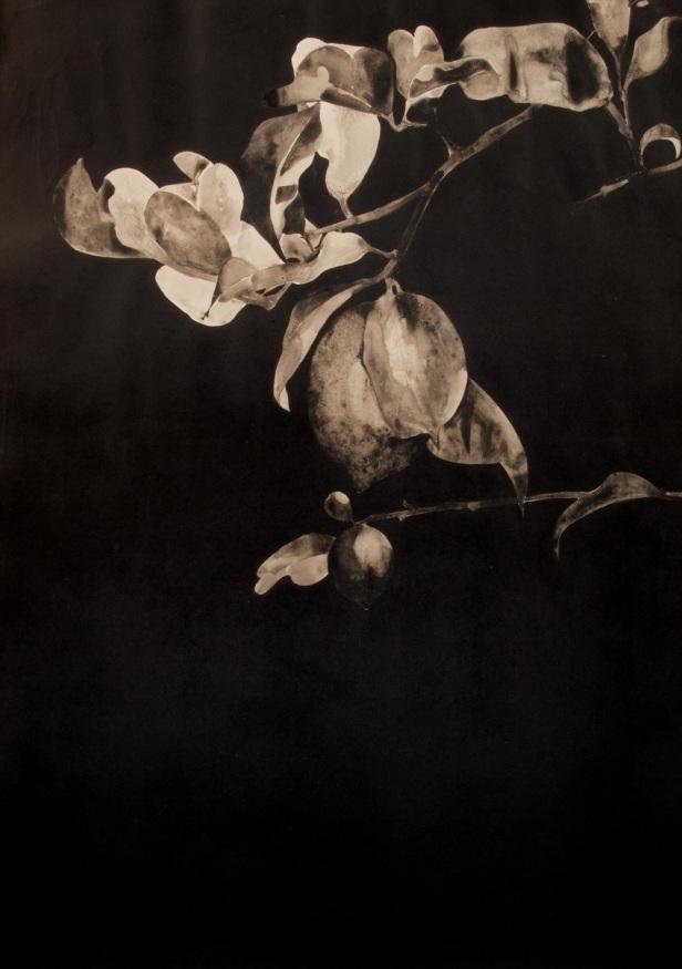 Domingos Rego S/título, 2014. Pigmento natural, ligante e acrílico sobre papel 84x59,4cm. Cortesia do artista e Galeria João Esteves de Oliveira.